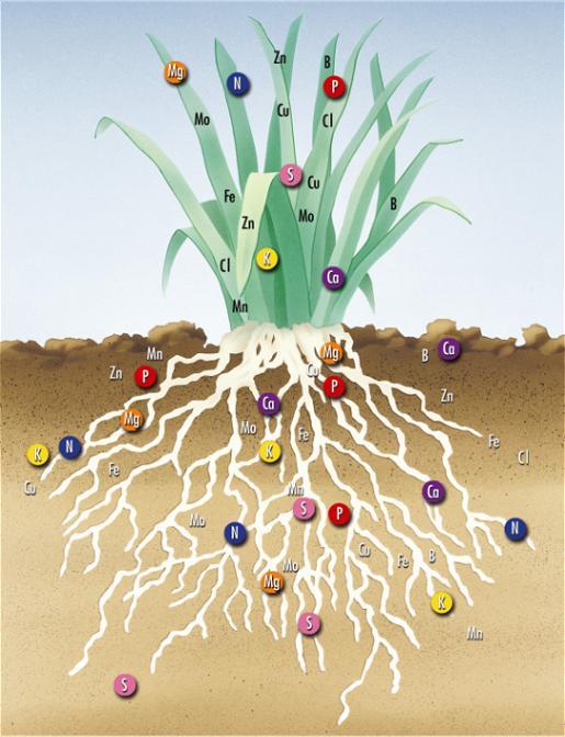 ảnh hưởng của các nguyên tố hóa học đến sự phát triển của cây trồng